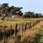 Neuseeland_Wind