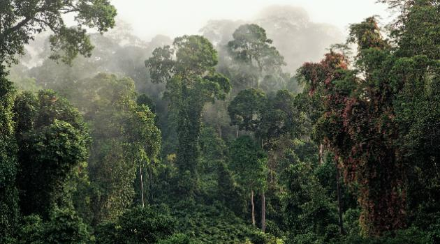 regenwald-costa rica_energy-mag